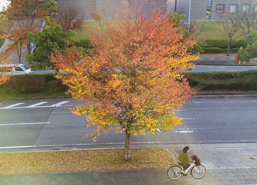 IMG 8572 1 - 州見台(くにみだい)の街路樹が、なんだかお洒落な件について。